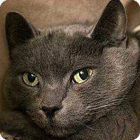 Adopt A Pet :: Mystery - Toronto, ON