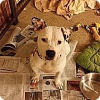 Adopt A Pet :: Emory - Marietta, GA