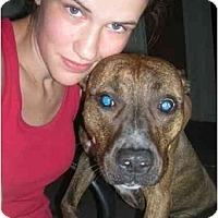 Adopt A Pet :: Matilda aka Tiliie - Jackson, MI