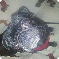 Adopt A Pet :: Olivia - Cumberland, MD