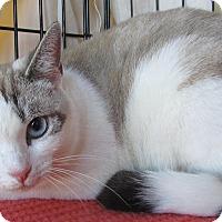 Adopt A Pet :: Audrey - Seminole, FL