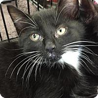 Adopt A Pet :: Lexus - East Hanover, NJ