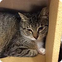 Adopt A Pet :: Belle - Colmar, PA