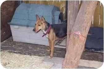 Terrier (Unknown Type, Small) Mix Dog for adoption in Groveland, Florida - Mia