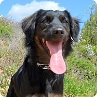 Adopt A Pet :: Misa - San Diego, CA