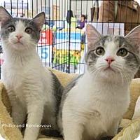 Adopt A Pet :: Rendezvous - Merrifield, VA