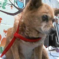 Adopt A Pet :: Corgi Mix Sr Ml - Lomita, CA