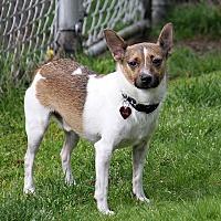 Adopt A Pet :: Neil - Portland, OR