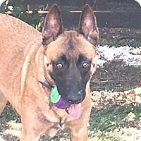 Adopt A Pet :: Maggie - Carlsbad, CA