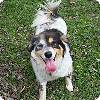 Adopt A Pet :: Duet - Brownsboro, AL