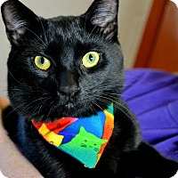 Adopt A Pet :: SCORCH - SWEET SILLY STRAY - Plano, TX