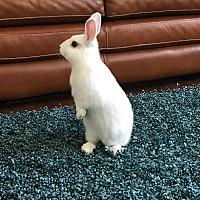 Adopt A Pet :: Juneau - Los Angeles, CA