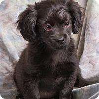 Adopt A Pet :: LUKE - Anna, IL