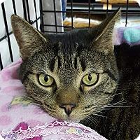 Adopt A Pet :: Robbie - Toronto, ON