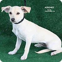 Adopt A Pet :: A092407 - Hanford, CA