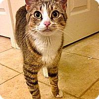 Adopt A Pet :: Portland - Escondido, CA