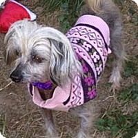 Adopt A Pet :: Holly (fostered in MD) - Gilford, NH