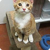 Adopt A Pet :: Connor - Long Beach, CA