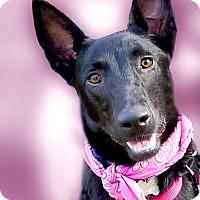 Adopt A Pet :: Bambie PENDING - Sacramento, CA