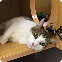 Adopt A Pet :: Carmella - East Meadow, NY