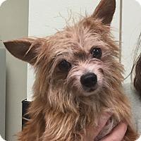 Adopt A Pet :: Bubby - geneva, FL