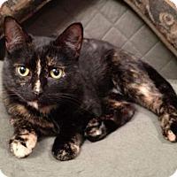 Adopt A Pet :: Daiquiri-Fostered - Rustburg, VA