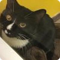 Adopt A Pet :: Mitten 4279 - Columbus, GA
