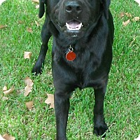 Adopt A Pet :: Dyson - Wallis, TX