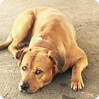Adopt A Pet :: Charlie - Princeton, KY