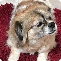 Adopt A Pet :: Bell - Tucson, AZ