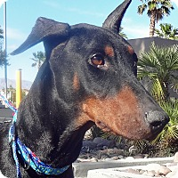 Adopt A Pet :: Hannah - Las Vegas, NV