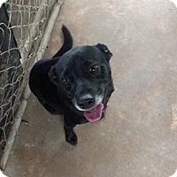 Adopt A Pet :: Dewy - Hammond, LA