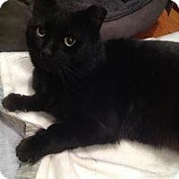 Adopt A Pet :: JJ - Chicago, IL