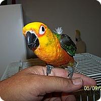 Adopt A Pet :: Lola - Lexington, GA