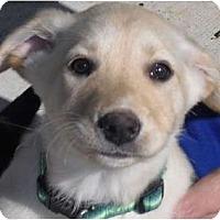 Adopt A Pet :: Faith - Kingwood, TX