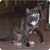 Adopt A Pet :: Selena - Colmar, PA