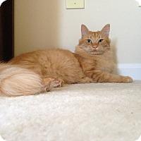 Adopt A Pet :: Bosco - Monroe, GA