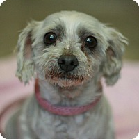 Adopt A Pet :: Aurora - Canoga Park, CA