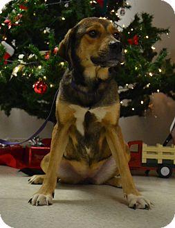 Shepherd (Unknown Type) Mix Dog for adoption in Lebanon, Missouri - Jasmine