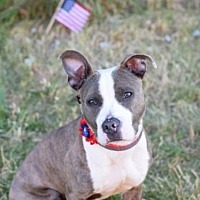 Adopt A Pet :: Chex/Monster - Manhattan, NY