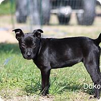 Adopt A Pet :: Dakota - Hayes, VA