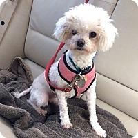 Adopt A Pet :: Mattie - san diego, CA