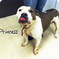 Adopt A Pet :: Princess - Defiance, OH