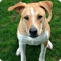 Adopt A Pet :: Mike W - Olympia, WA