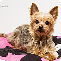 Adopt A Pet :: Piper - Baton Rouge, LA
