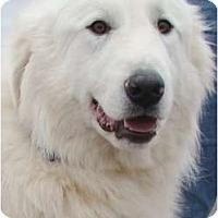 Adopt A Pet :: Clyde -Adopted - Oklahoma City, OK