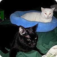 Adopt A Pet :: Sabbath - Morgan Hill, CA