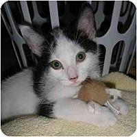 Adopt A Pet :: Indy - Richmond, VA
