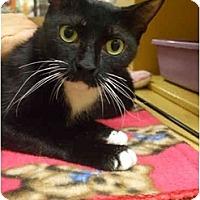 Adopt A Pet :: Fiona - Orlando, FL