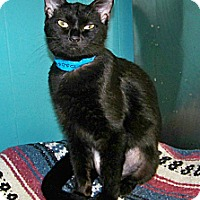 Adopt A Pet :: Fisher - Dover, OH